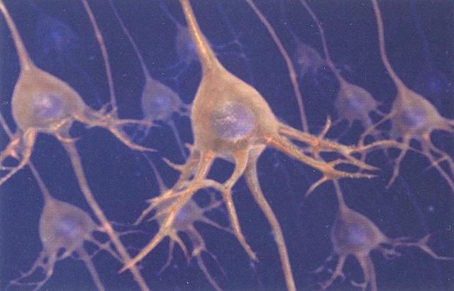 A parma studiando i neuroni hanno capito perch il bello e il buono accendono il nostro cervello - Neuroni a specchio ...